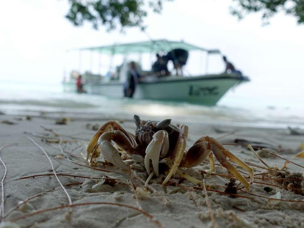 Palau búvártúra és búvárkodás